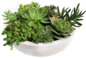 Introducing the ever so popular Succulent Garden. Super easy care and long lasting. Perfect for a kitchen, bathroom, patio or office. We offer same-day Succulent delivery to Albuquerque, NM, surrounding areas or nationwide.
