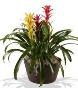 These bold colors of the Bromeliad Garden are a lively addition to any space!